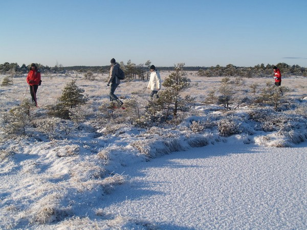 Bog Walking with Snowshoes